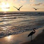 Pure Beauty in Longboat Key: Whitney Beach Vacation