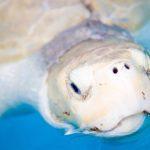 image sea turtle